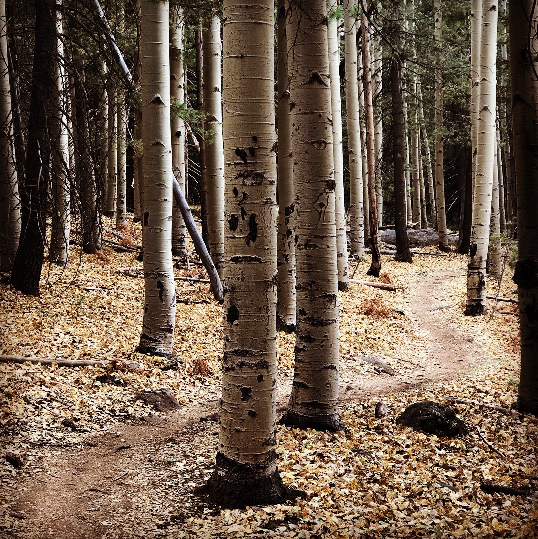 aspens trees single track top 5 passages